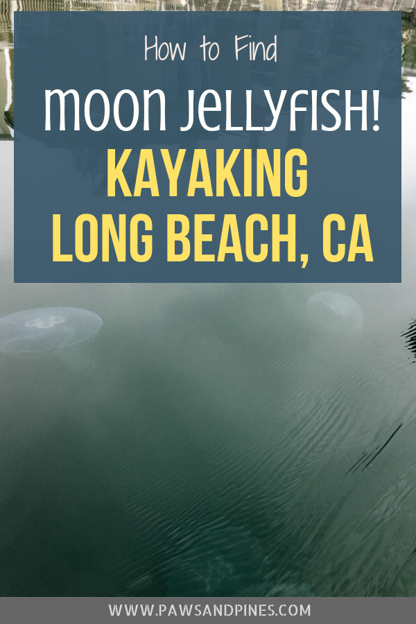 Kayaking to the moon jellies in the Naples Canals is one of the best activities to do in Long Beach! Both kid- and dog-friendly, you'll have a blast exploring the moon jellyfish cove at the end of Spinnaker's Bay. Find out when is moon jellyfish season, how to find them, and more in this post! #longbeach #kayaking #socal