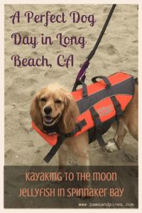 long beach kayak with dog - kayaking to see moon jellies in long beach