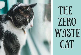 Zero Waste Cat - a Complete Checklist