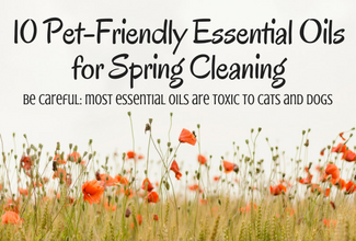 10 Most Effective (Pet-Friendly) Essential Oils for Home Cleaning