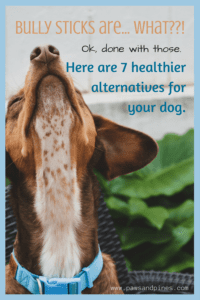 Dog with text overlay: Bully sticks are what?! Ok, done with those. Here are 7 healthier alternatives for your dog