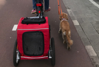 If you live in Amsterdam with a dog, you'll want to look into a hondenfietskar, or dog bike trailer. There are so many brands and variations out there so to save you time, I've compiled the best ones that I considered when I was shopping for my own hond fiets.